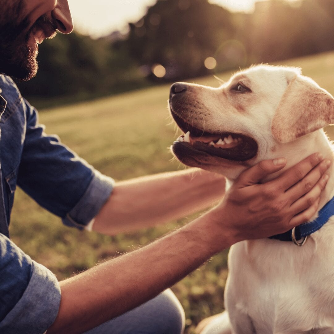 Dog friendly holiday cottages in Wales